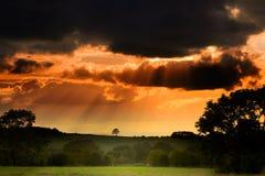 Baum am Sonnenuntergang lizenzfreies stockbild