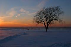 Baum am Sonnenuntergang lizenzfreie stockbilder