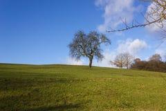 Baum am sonnigen Tag der Einführung des blauen Himmels im Dezember Stockfoto