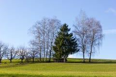 Baum am sonnigen Tag der Einführung des blauen Himmels im Dezember Lizenzfreies Stockbild