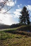 Baum am sonnigen Tag der Einführung des blauen Himmels im Dezember Lizenzfreies Stockfoto