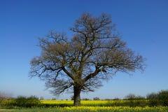 Baum am sonnigen vollen Tag Lizenzfreies Stockbild