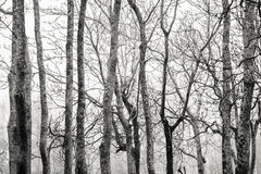 Baum-Stämme und Niederlassungen gegen den Himmel Lizenzfreies Stockbild