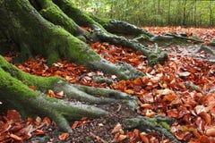 Baum-Stamm Stockfotografie