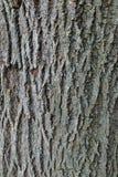 Baum-Stamm-Abschluss oben Stockfoto