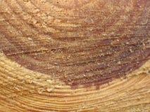 Baum-Stamm-Querschnitt Lizenzfreie Stockbilder