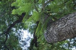 Baum-Stamm und Niederlassungen Stockbilder