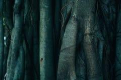 Baum-Stamm und Wurzel-Hintergrund stockbild