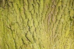 Baum-Stammbeschaffenheitsmakroschuß Stockbilder