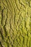 Baum-Stammbeschaffenheitsmakroschuß Stockbild