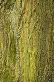 Baum-Stammbeschaffenheitsmakroschuß Lizenzfreies Stockbild