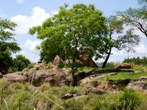 Baum steigt aus den Felsen heraus Lizenzfreies Stockfoto