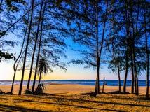 Baum am Strand Lizenzfreies Stockfoto