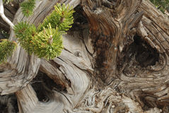 Baum-Strudel Stockfotos