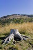 Baum-Stumpf Stockfoto