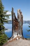 Baum-Stumpf Lizenzfreie Stockbilder