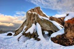 Baum-Stumpf abgedeckt im Schnee. Lizenzfreies Stockfoto