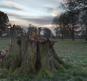 Baum-Stumpf an der Dämmerung Lizenzfreie Stockbilder