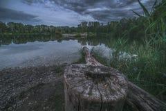 Baum-Stumpf durch den See Stockbild