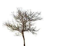 Baum, Sumer Stockfotografie