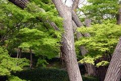 Baum-Szene Stockbild