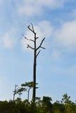 Baum tot stockfoto