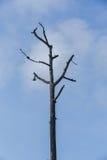 Baum tot stockbilder