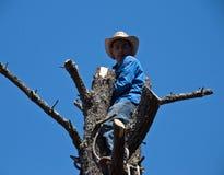 Baum-Trimmer auf einem Baum, der San Francisco Suburb übersieht Lizenzfreies Stockbild