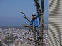 Baum-Trimmer auf einem Baum, der San Francisco Suburb übersieht Lizenzfreie Stockbilder