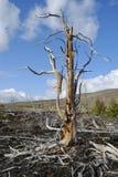 Baum trocken Stockfoto