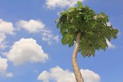 Baum u. Himmel Stockbild