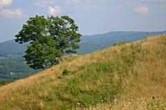 Baum u. Zaun auf Abhang Lizenzfreie Stockfotos