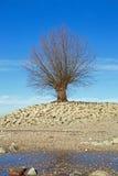 Baum am Ufer des Rheins Rhein stockbilder