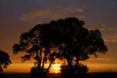 Baum-Umarmen Stockbild