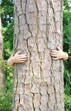 Baum-Umarmungen Stockbild