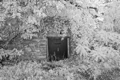 Baum umfasste Eingang zu begrabenem Weinkeller Stockfotografie