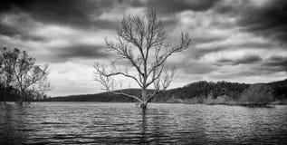 Baum umgeben durch Wasser in einem See Stockbilder