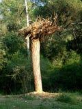 Baum in umgekehrtem Stockbild