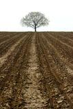 Baum und Ackerland lizenzfreies stockfoto