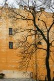 Baum und alter Wandhintergrund Lizenzfreies Stockfoto