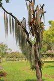Baum und Anlagen Lizenzfreies Stockfoto