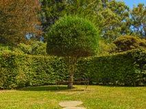 Baum und Bank Lizenzfreie Stockbilder