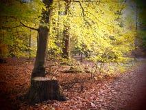 Baum und Baumstumpf in einem wilden und romantischen forrest lizenzfreie stockfotos