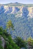 Baum und Berge Stockfoto