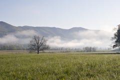 Baum und Berge im Nebel Stockfotografie