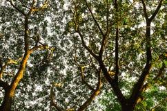 Baum und Blätter Stockfotografie