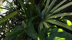 Baum und Blätter, Abschluss oben stock video footage