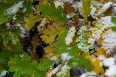 Baum und Blätter bedeckt im Schnee im Winter lizenzfreie stockfotos