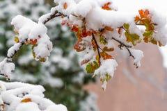 Baum und Blätter bedeckt im Schnee im Winter lizenzfreies stockfoto