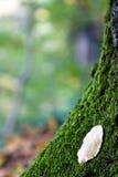 Baum und Blatt Stockfotos